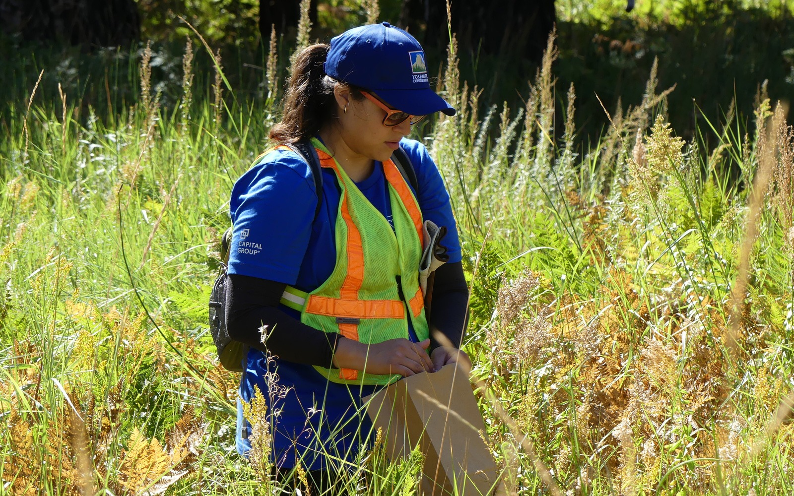 A volunteer from Capital Group collects seeds for a restoration project during one of the company's 2019 work weekends in Yosemite Valley. Photo: Steven Matros.