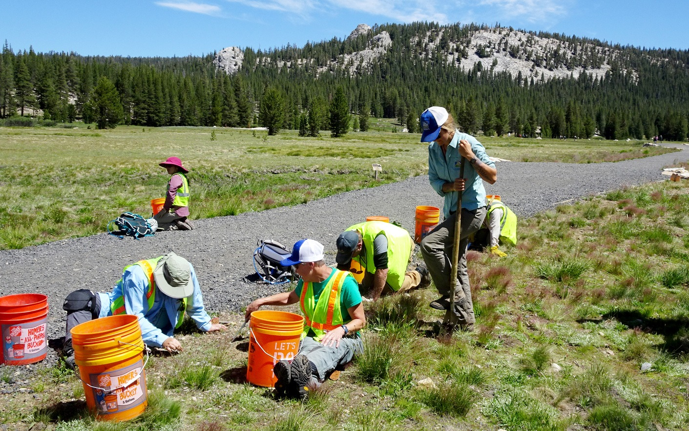 Equipped with neon vests, orange buckets and digging tools, 2019 work week volunteers help revitalize habitat in Tuolumne Meadows. Photo: Steven Matros.