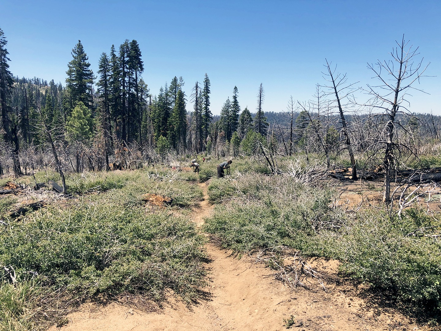 The 2020 CCC Merced crew works on clearing brush from the trail to Ostrander Lake. Photo: Courtesy of NPS (July 2020)
