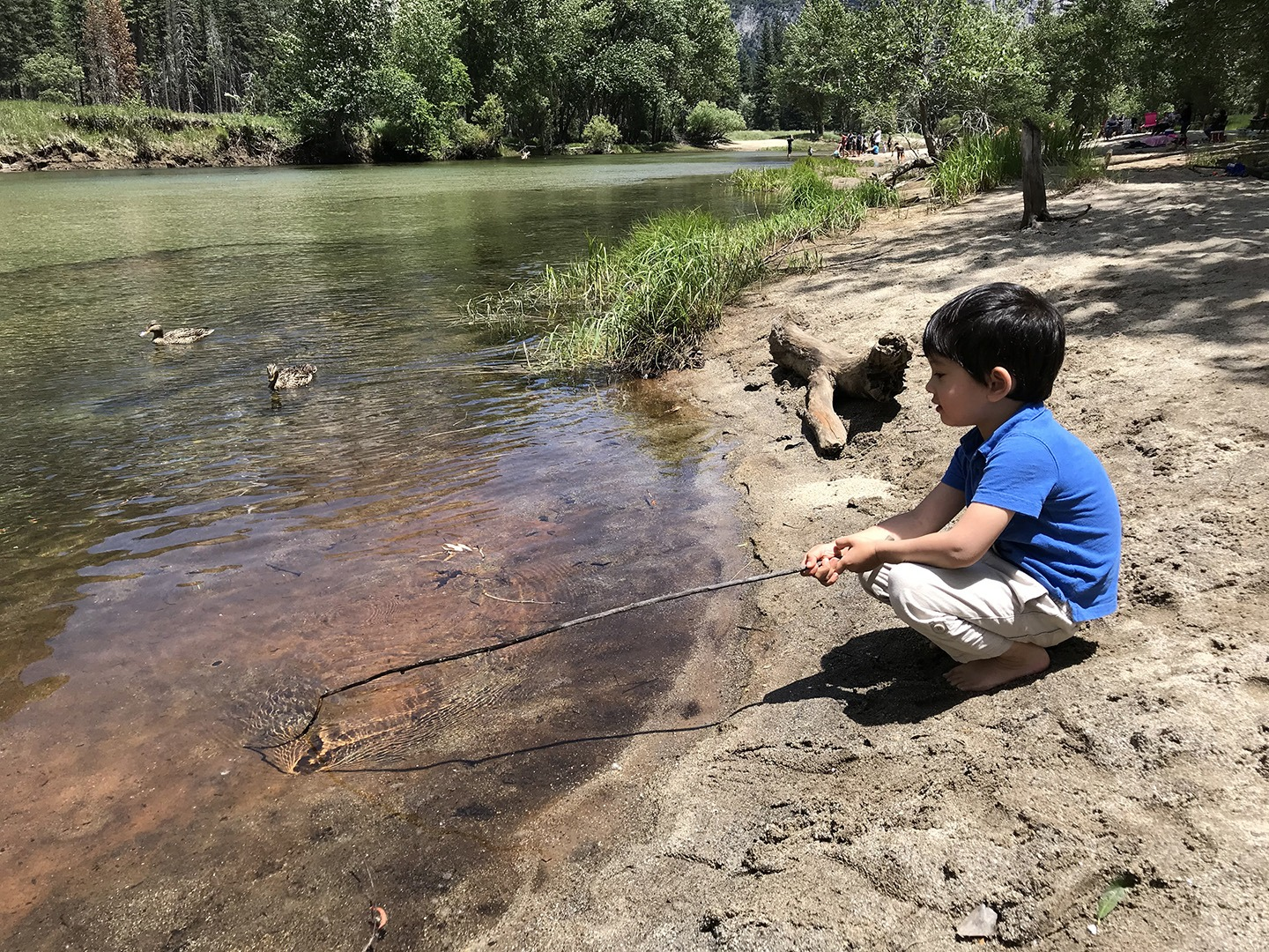 Owen, age 4, plays with a stick on the beach beside the Merced River in Yosemite Valley, as two ducks swim nearby.