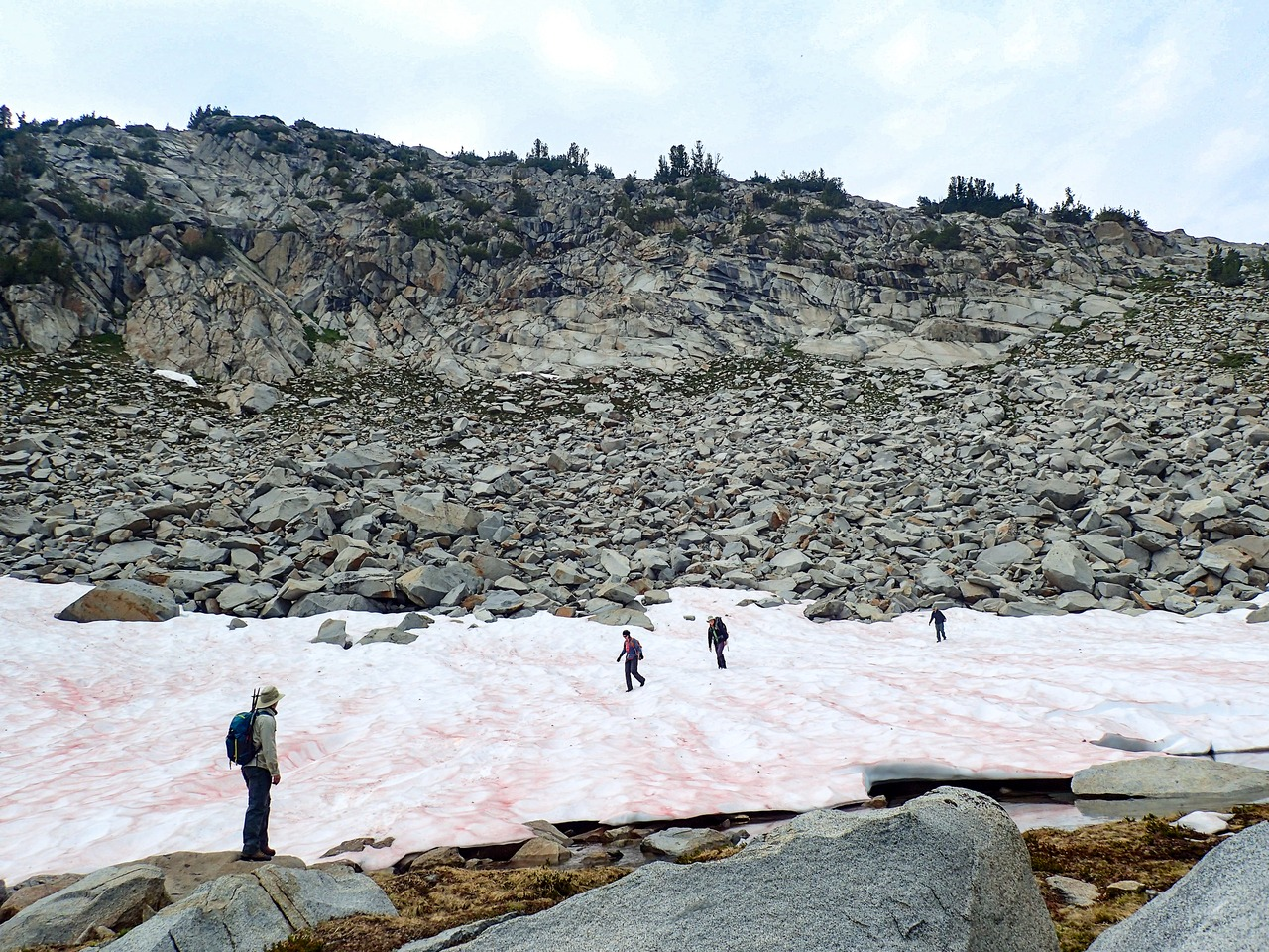 A group of hikers crosses a snow field on a high, rocky slope in the eastern Sierra Nevada. The snow is streaked with pink patches of algae.