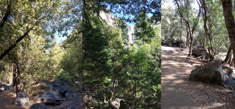 Dappled light and lacy leaves: scenes from Jennifer's hikes with guide Andrea Canapary in September 2018. Photos: Jennifer Franz