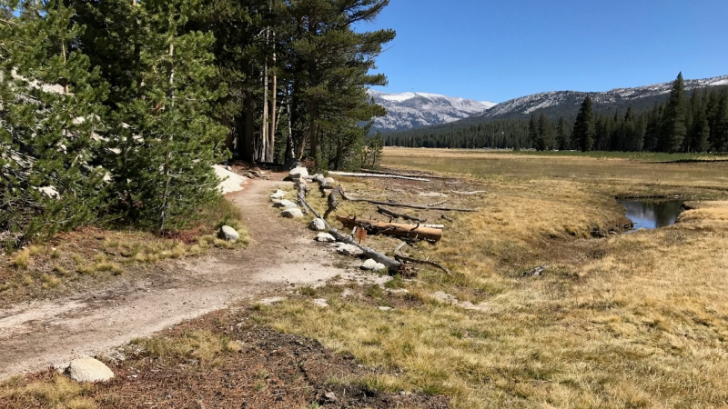 At the base of Pothole Dome, water flowing off the granite is captured by a trail and concentrated into erosion gullies. That process is causing the surrounding meadow to dry out. With support from a 2019 grant, park experts will conduct research and planning for a project to restore the wetland. Photo: NPS