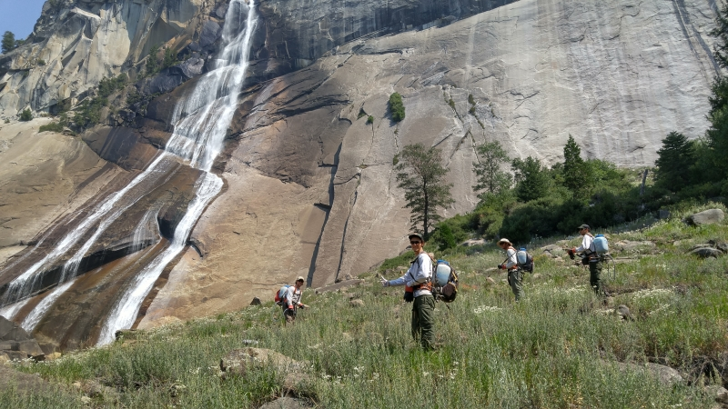 With support from volunteers and interns, the team removed acres of invasive velvet grass at Vernal Fall and neighboring Nevada Fall (pictured here) to help protect the rare flora that depend on the spray zone habitat. Photo: NPS.