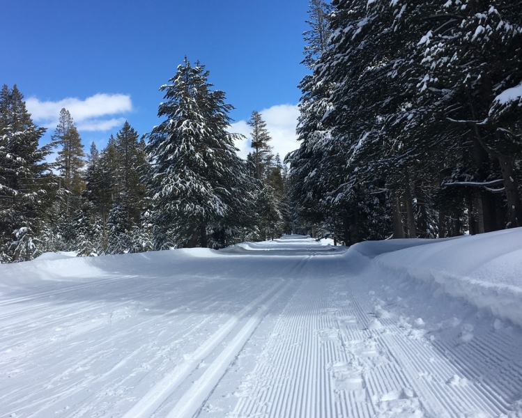 Separate tracks make for happy trails! Make snow travel a little easier for fellow travelers by keeping snowshoe and ski tracks apart. Photo: Erin Hallett
