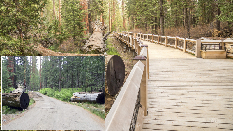 In place of the old paved roadway, a raised boardwalk runs alongside the famous Fallen Monarch tree, letting people get a close look at ancient toppled sequoia while protecting the plants and water system below. Photos: Yosemite Conservancy (before), Yosemite/Keith Walklet (after)