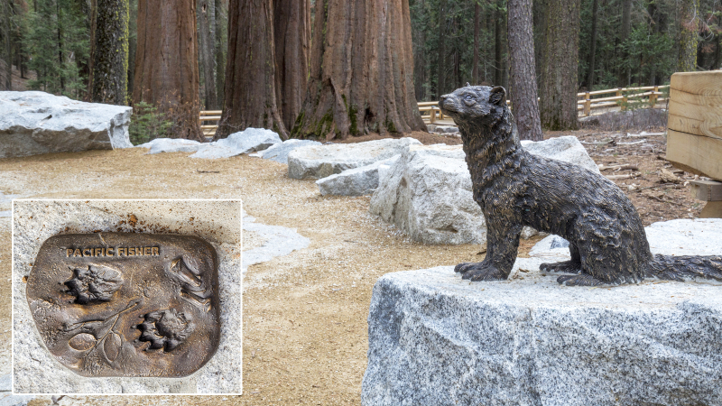 Throughout the restored Mariposa Grove, bronze sculptures introduce visitors to the diverse wildlife that make their homes among the sequoias. Photo: Yosemite Conservancy/Keith Walklet